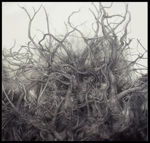 island root